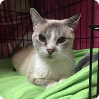 Adopt A Pet :: Ian - Centerville, GA