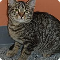 Adopt A Pet :: Dexter - Michigan City, IN