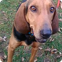 Adopt A Pet :: Jenny - Lima, PA