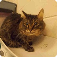 Adopt A Pet :: Rosie- - Arlington, VA