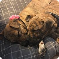 Adopt A Pet :: Quinn - Albemarle, NC