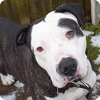 Adopt A Pet :: Sid, needing foster/adopter - Snohomish, WA