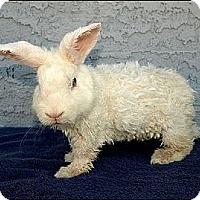 Adopt A Pet :: Sonata - Phoenix, AZ