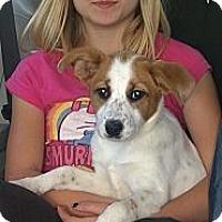 Adopt A Pet :: Mckenzie - Ranger, TX