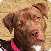 Adopt A Pet :: Sabrina - Gilbert, AZ