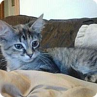 Adopt A Pet :: Petunia - Byron Center, MI