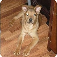 Adopt A Pet :: Rusty aka Simba - Fort Valley, GA
