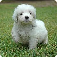Adopt A Pet :: Frank - La Habra Heights, CA