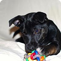Adopt A Pet :: Bria - Randolph, NJ
