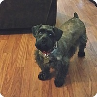 Adopt A Pet :: Peyton - Sharonville, OH
