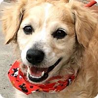 Adopt A Pet :: BRIGGS (video) - Los Angeles, CA