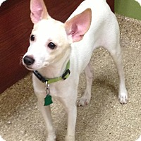 Adopt A Pet :: Sampson - Fairview Heights, IL