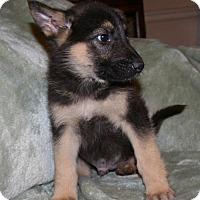 Adopt A Pet :: Cooper - Holly Hill, SC