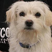 Adopt A Pet :: Pink - Rosamond, CA