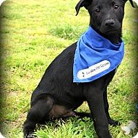Adopt A Pet :: Skippy~ meet me! - Glastonbury, CT