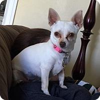 Adopt A Pet :: Sophia - Davenport, IA