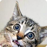 Adopt A Pet :: Blane - Wildomar, CA