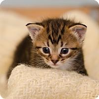 Adopt A Pet :: Sarafina $95 - Seneca, SC