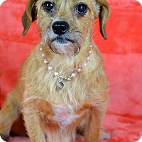 Terrier (Unknown Type, Small) Mix Dog for adoption in Jackson, Mississippi - Abigail