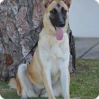 Adopt A Pet :: Camilla - Mira Loma, CA