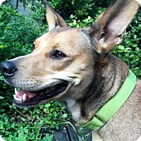Adopt A Pet :: Olivia - Austin, TX
