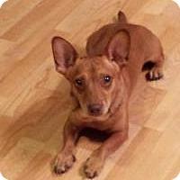 Adopt A Pet :: Pip Squeak - New Smyrna Beach, FL