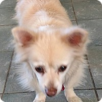 Adopt A Pet :: Oso - San Diego, CA