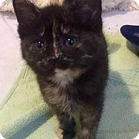 Adopt A Pet :: Thimble - Leonardtown, MD
