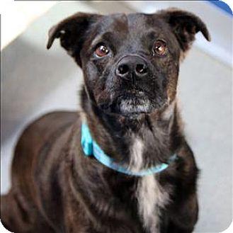 Terrier (Unknown Type, Medium) Mix Dog for adoption in McKinney, Texas - Jasmine