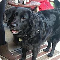 Adopt A Pet :: Effie - Adorable BFF! - Federal Way, WA