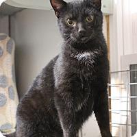 Adopt A Pet :: Cole - Carlisle, PA