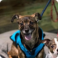 Adopt A Pet :: Alaska! - New York, NY