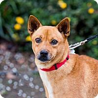 Adopt A Pet :: Chicha - San Diego, CA