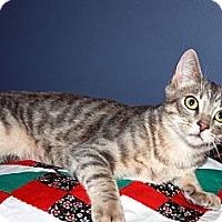 Adopt A Pet :: Sullivan - Overland Park, KS