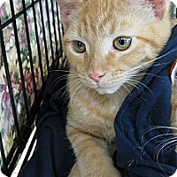 Adopt A Pet :: Henry - Walkersville, MD