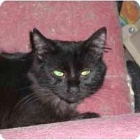 Adopt A Pet :: CeCe - Lombard, IL