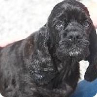 Adopt A Pet :: Bella - Russellville, KY