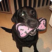 Adopt A Pet :: Newman - Surrey, BC