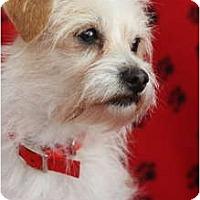 Adopt A Pet :: TAZ - san diego, CA