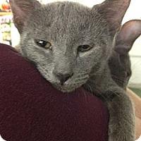 Adopt A Pet :: Mason - Chandler, AZ