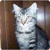 Adopt A Pet :: Pauline - Grand Rapids, MI