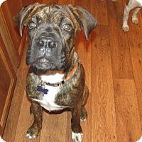 Adopt A Pet :: Bo - Franklin, VA
