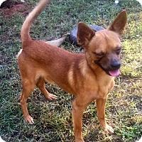 Adopt A Pet :: Petey - North Brunswick, NJ