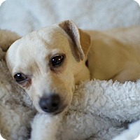 Adopt A Pet :: Hopp-Along Cassidy - Greenville, SC