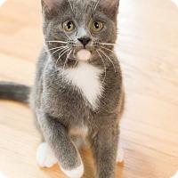 Adopt A Pet :: Cortland - Chicago, IL