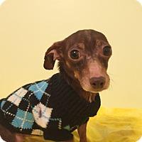 Adopt A Pet :: Simon - Schaumburg, IL