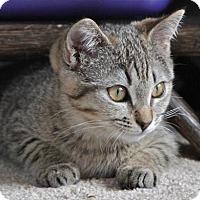 Adopt A Pet :: Rye - ADOPTION PENDING! - Potomac, MD