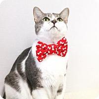 Adopt A Pet :: Milton - Murfreesboro, NC