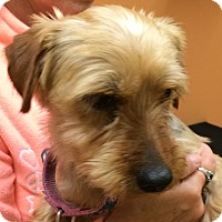 Adopt A Pet :: Jessie - Fairview Heights, IL