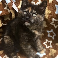Adopt A Pet :: Ciara - Bloomsburg, PA